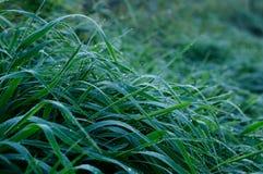 στενό χλόης πεδίων δροσιάς βάθους Στοκ Φωτογραφίες