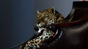 στενό leopard πορτρέτο επάνω φιλμ μικρού μήκους