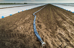 Στεριά - ξηρασία - και μάνικα για το πότισμα στοκ εικόνα