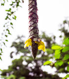 Στεφάνια κίτρινα Στοκ Εικόνα
