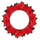 Στεφάνι και διάστημα λουλουδιών poinsettia Χριστουγέννων για το κείμενο Στοκ φωτογραφίες με δικαίωμα ελεύθερης χρήσης