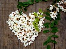 Στεφάνι καρδιών των άσπρων πετάλων λουλουδιών ακακιών ανθίζοντας και των πράσινων φύλλων Στοκ Εικόνες