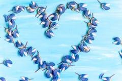 Στεφάνι καρδιών των μπλε πετάλων και των λουλουδιών lupines στο σκοτεινό ξύλινο υπόβαθρο Στοκ Εικόνα
