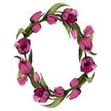 Στεφάνι με τις χρωματισμένες ρόδινες τουλίπες Floral ωοειδές πλαίσιο με τις ζωηρόχρωμες τουλίπες : r διανυσματική απεικόνιση
