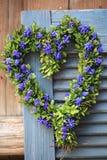 Στεφάνι πορτών στη μορφή καρδιών με τα λουλούδια υάκινθων πυξαριού και σταφυλιών Στοκ εικόνες με δικαίωμα ελεύθερης χρήσης