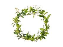 Στεφάνι του λουλουδιού αναρριχητικών φυτών Στοκ φωτογραφίες με δικαίωμα ελεύθερης χρήσης
