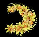 Στεφάνι των yellow-orange κρίνων στο μαύρο υπόβαθρο Απεικόνιση των θερινών λουλουδιών στο ύφος watercolor ελεύθερη απεικόνιση δικαιώματος