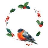Στεφάνι Χριστουγέννων Watercolor με το κόκκινο χειμερινό πουλί bullfinch Στοκ Εικόνες