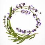 Στεφάνι lavender Στοκ Εικόνες