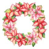 Στεφάνι Watercolor από τα κόκκινα και ρόδινα λουλούδια poinsettia για το Chris ελεύθερη απεικόνιση δικαιώματος