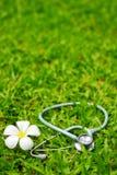 στηθοσκόπιο χλόης λουλ Στοκ Εικόνες