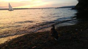 Στην ακτή Στοκ φωτογραφία με δικαίωμα ελεύθερης χρήσης
