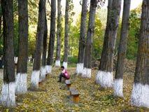Στην είσοδο του μοναστηριού Ramet, Ρουμανία Στοκ φωτογραφία με δικαίωμα ελεύθερης χρήσης