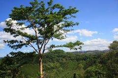 Στην κορυφή του λόφου στοκ εικόνα