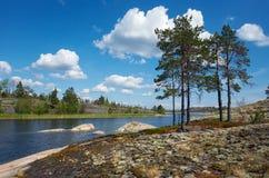 στην ξηρά πεύκα Στοκ φωτογραφία με δικαίωμα ελεύθερης χρήσης