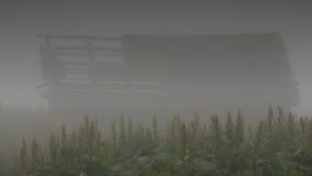Στην ομίχλη Στοκ εικόνα με δικαίωμα ελεύθερης χρήσης