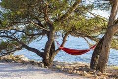 Στην παραλία μεταξύ των δέντρων πεύκων υπάρχει μια αιώρα Στοκ Εικόνες