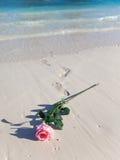 Στην παραλία μια άνθηση αυξήθηκε Στοκ φωτογραφία με δικαίωμα ελεύθερης χρήσης