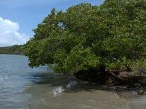 Στην παραλία Jauca στοκ φωτογραφίες