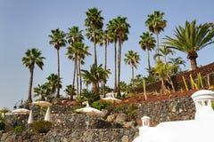 Στην παραλία Tenerife Στοκ εικόνα με δικαίωμα ελεύθερης χρήσης