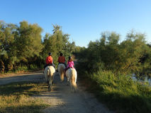 Στην πλάτη αλόγου στην περιοχή Camargue, Γαλλία Στοκ Εικόνα