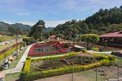 Στην τράπεζα caldera το ρυάκι στο boquete είναι η έδρα του λουλουδιού και του καφέ δίκαιος Παναμάς στοκ εικόνες με δικαίωμα ελεύθερης χρήσης