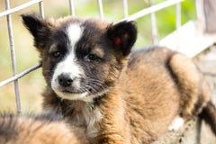 Στηργμένος σκυλί κουταβιών Στοκ Εικόνες