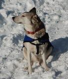 Στηργμένος σκυλί στοκ φωτογραφίες