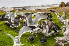 Στηριγμένοι γλάροι Στοκ φωτογραφίες με δικαίωμα ελεύθερης χρήσης