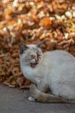 Στη γη η γάτα έχει τα τρόφιμα και αναμένει με ενδιαφέρον στοκ φωτογραφία με δικαίωμα ελεύθερης χρήσης