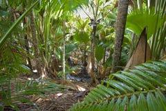Στη ζούγκλα στοκ φωτογραφίες με δικαίωμα ελεύθερης χρήσης