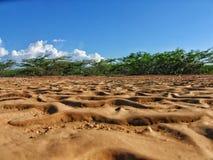 στη μέση της κολομβιανής ερήμου Στοκ φωτογραφία με δικαίωμα ελεύθερης χρήσης