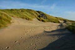 Στη μέση των αμμόλοφων άμμου με τη χλόη αμμόλοφων στη Βόρεια Θάλασσα Στοκ φωτογραφίες με δικαίωμα ελεύθερης χρήσης