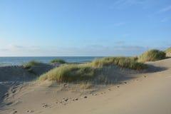 Στη μέση των αμμόλοφων άμμου με τη χλόη παραλιών στη Βόρεια Θάλασσα Στοκ Εικόνες