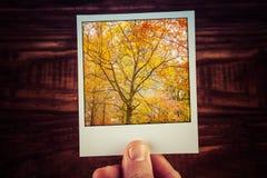 Στιγμιαία φωτογραφία polaroid εκμετάλλευσης χεριών του όμορφου δέντρου με Στοκ εικόνες με δικαίωμα ελεύθερης χρήσης