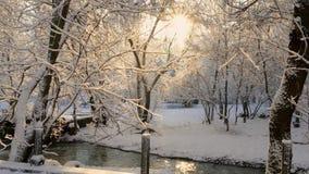 Στις ακτίνες του ήλιου στο χιόνι λειωμένων μετάλλων δέντρων φιλμ μικρού μήκους