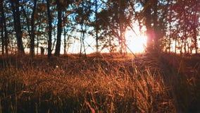 Στις αρχές βραδιού στο δάσος το καλοκαίρι απόθεμα βίντεο