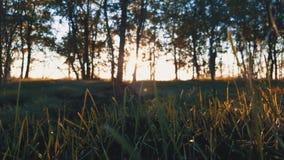 στις αρχές δασικού πρωινού φιλμ μικρού μήκους