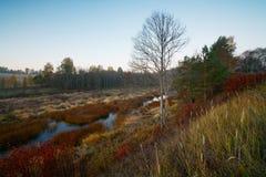 Στις αρχές πρωινού φθινοπώρου Στοκ Εικόνες