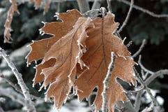 Στις αρχές πρωινού χειμερινού παραμυθιού στοκ εικόνες