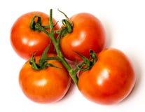 Στις ντομάτες αμπέλων στοκ φωτογραφίες με δικαίωμα ελεύθερης χρήσης