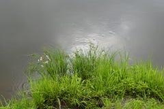 Στις όχθεις του ποταμού Pripyat Καλοκαίρι - Ιούλιος Αντανάκλαση του ουρανού στον καθρέφτη του νερού Στοκ Εικόνες