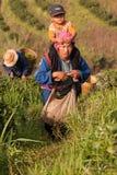 Στις mountainside γυναίκες της εθνικής ομάδας Akha, φύλλα τσαγιού συγκομιδής Στοκ Εικόνες