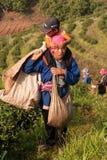 Στις mountainside γυναίκες της εθνικής ομάδας Akha, φύλλα τσαγιού συγκομιδής Στοκ εικόνα με δικαίωμα ελεύθερης χρήσης