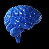 Στιλπνός μπλε εγκέφαλος Στοκ φωτογραφία με δικαίωμα ελεύθερης χρήσης