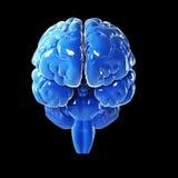Στιλπνός μπλε εγκέφαλος Στοκ εικόνα με δικαίωμα ελεύθερης χρήσης