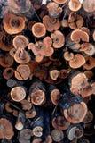 στοίβα κούτσουρων Στοκ Εικόνα