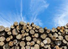 Στοίβα της κομμένης ξυλείας Στοκ Φωτογραφία