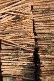 Στοιχεία συμπεριφοράς ξυλείας Στοκ φωτογραφίες με δικαίωμα ελεύθερης χρήσης