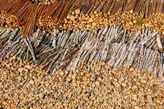 Στοιχεία συμπεριφοράς ξυλείας Στοκ Εικόνες